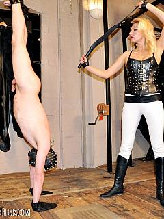 Nude male is hanging upsidedown and suffering pain from the bullwhip operated by the sexy blonde bitch