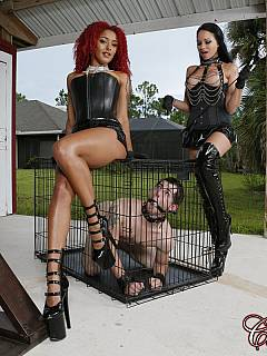 Caged petboy is in anticipation of a two beautiful girls to be punishing him in the BDSM chamber