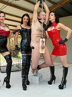 Older slave is handcuffed and suspended by his clamped balls by a group of beautiful and strict Goddesses